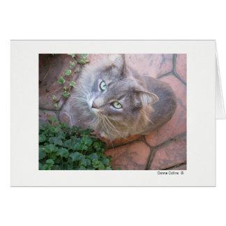 最高猫   #-3 ノートカード