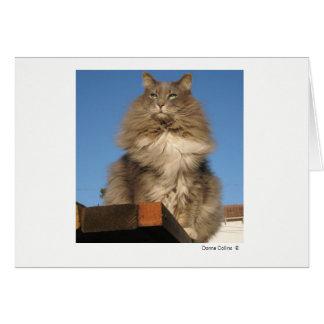 最高猫   #-4 ノートカード
