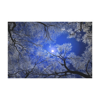 月光の木 キャンバスプリント