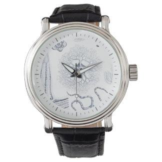 有史以前の海人生のCrinoids、Ophiura 腕時計