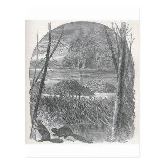 有生の世界-ビーバーのダムの一見 ポストカード