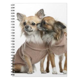 服を着る2匹のチワワ(2歳) ノートブック