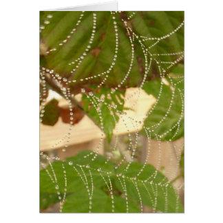 朝の蜘蛛の巣 カード