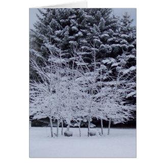 朝の降雪 カード
