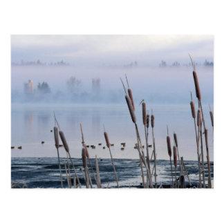 朝の霧の湖畔のネコヤナギ ポストカード
