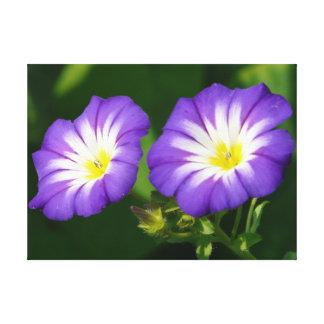 朝顔の花 キャンバスプリント