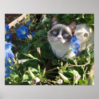 朝顔20x16ポスターの気難しい猫 ポスター