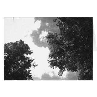 木および空の粒状の白黒イメージ カード