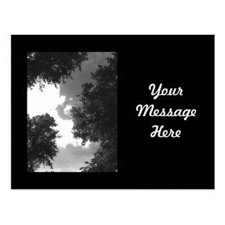 木および空の粒状の白黒イメージ ポストカード