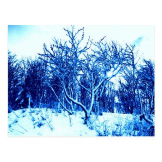 木および雪場面、コバルトブルー ポストカード