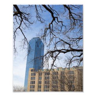 木および高い建物、ダラス、テキサス州 フォトプリント