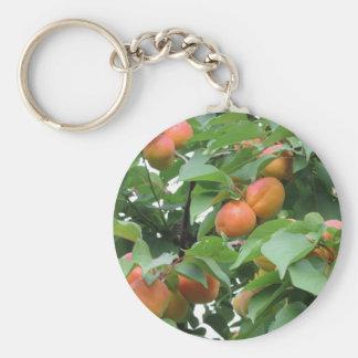 木でつるす熟した杏子。 タスカニー、イタリア キーホルダー