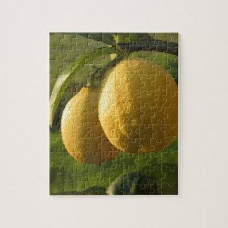 木でつるす2個の熟したレモン ジグソーパズル