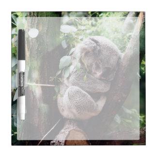 木でリラックスしているかわいいコアラ ホワイトボード