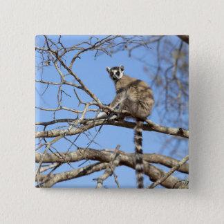 木で暖まっているリング後につかれたLemur (Lemurのcatta) 缶バッジ