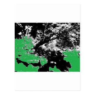 木との緑の反射 葉書き