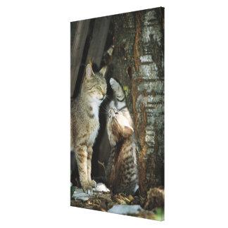 木による猫そして子ネコ キャンバスプリント