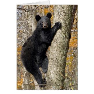 木に上っているアメリカのツキノワグマ カード