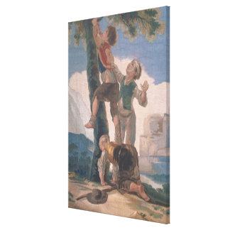 木に上っている男の子 キャンバスプリント