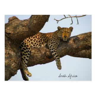 木に坐っているヒョウ ポストカード