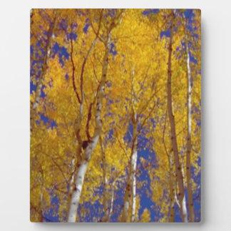 木のアメリカの秋季の写真撮影 フォトプラーク