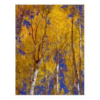 木のアメリカの秋季の写真撮影 ポストカード