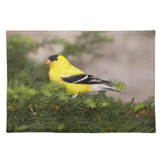 木のアメリカのGoldfinchの男性 ランチョンマット