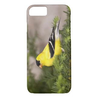 木のアメリカのGoldfinchの男性 iPhone 8/7ケース