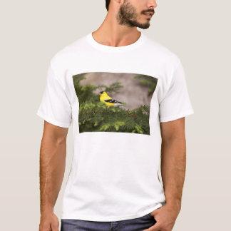 木のアメリカのGoldfinchの男性 Tシャツ
