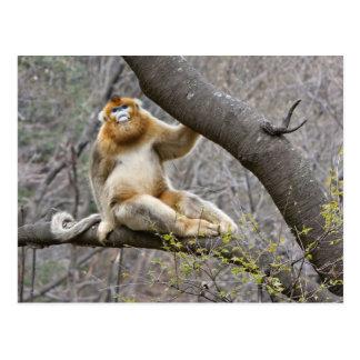 木のオスの金猿のポートレート ポストカード
