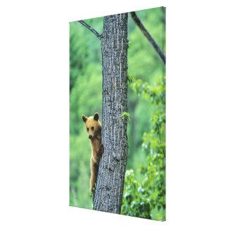 木のシナモンによって着色されるツキノワグマ キャンバスプリント