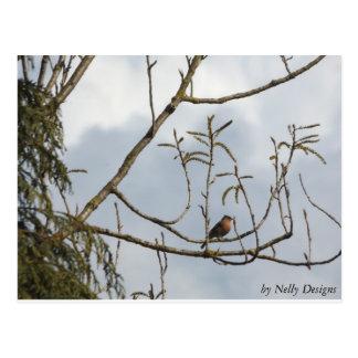 木のズアオアトリ ポストカード