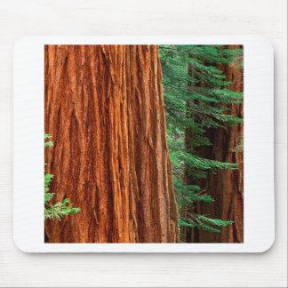 木のセコイアオスギのMariposa果樹園ヨセミテ マウスパッド