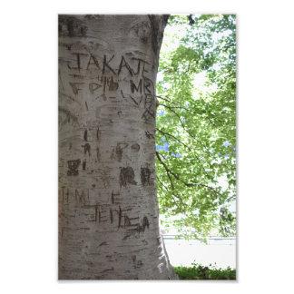 木のセントラル・パークの自然の写真撮影で切り分けられる フォトプリント