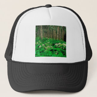 木のパースニップの震動《植物》アスペンコロラド州 キャップ