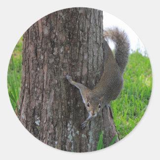 木のリス ラウンドシール
