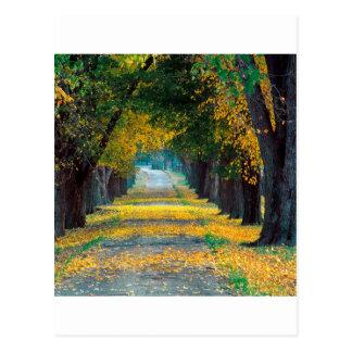 木のルーイスビルの道路ケンタッキー ポストカード
