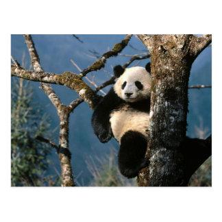 木の上のパンダ ポストカード