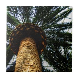 木の上 タイル