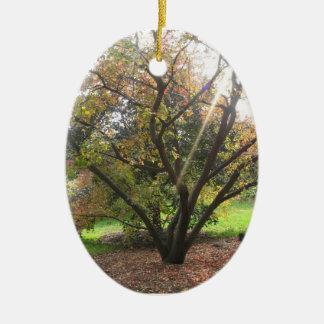 木の光線の秋のオーナメント セラミックオーナメント