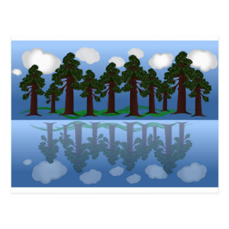木の反射 はがき