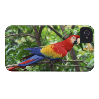 木の大枝の深紅のコンゴウインコ Case-Mate iPhone 4 ケース