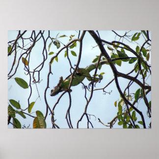 木の小枝の緑のイグアナ ポスター