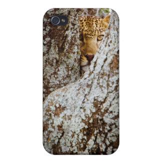 木の後ろに隠れているヒョウ(ヒョウ属Pardus) iPhone 4 Cover