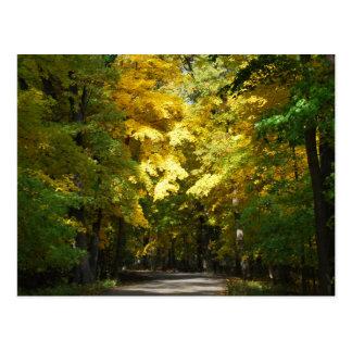 木の日光 ポストカード