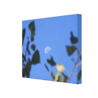 木の月 キャンバスプリント
