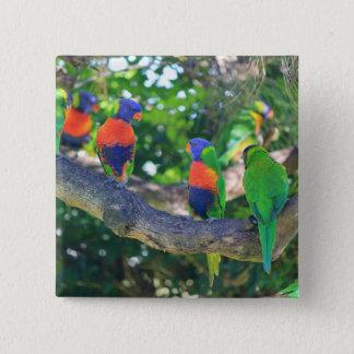木の枝の虹のlorikeetsの群 5.1cm 正方形バッジ