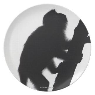 木の猿、Railay半島、 プレート