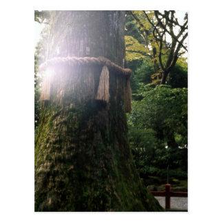 木の箱根の神聖な神社日本 ポストカード