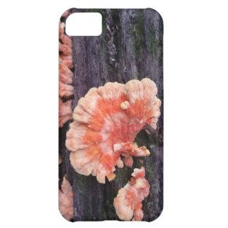 木の腐敗 iPhone 5C ケース